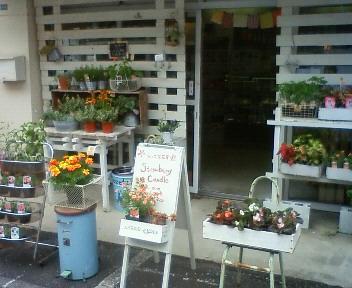 植物達〜〜kiku